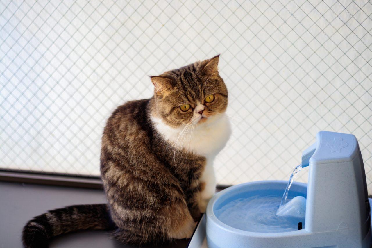 給水機と猫