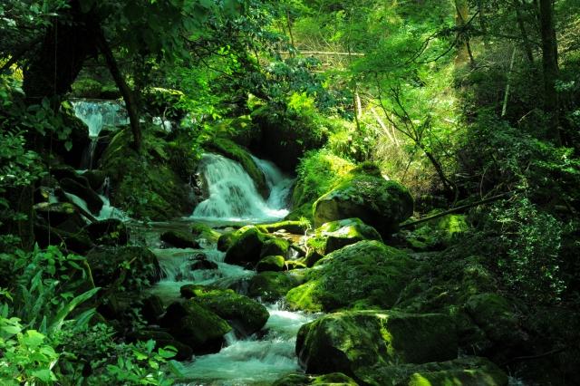 森の中の水源イメージ